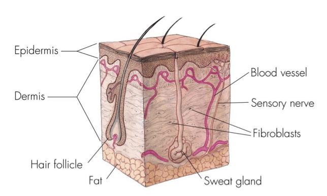 How Do Scars Occur?
